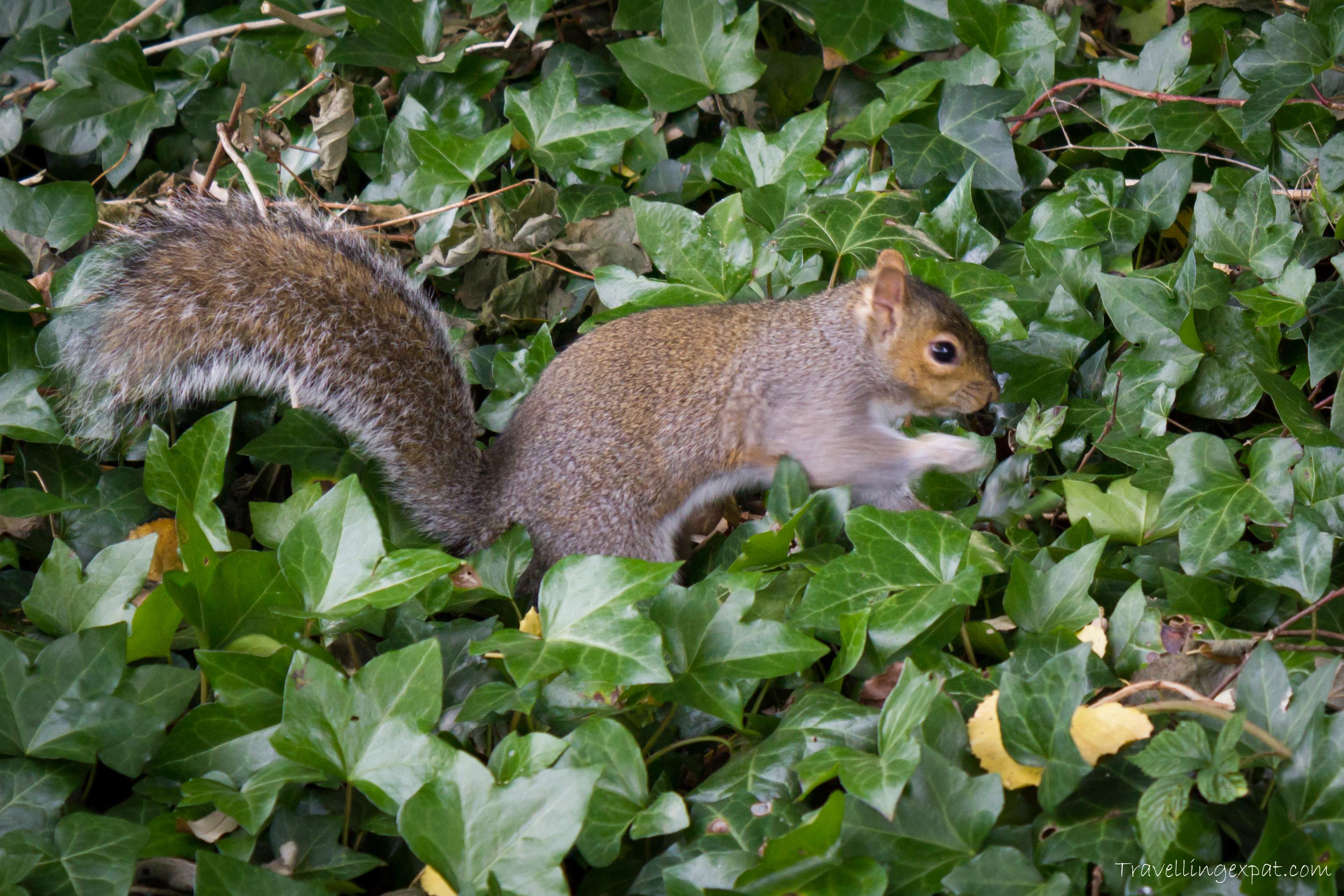 phoenix.park.scoiattolo